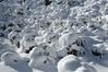 Snow sheeps ?
