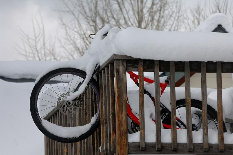 Crested-Bike