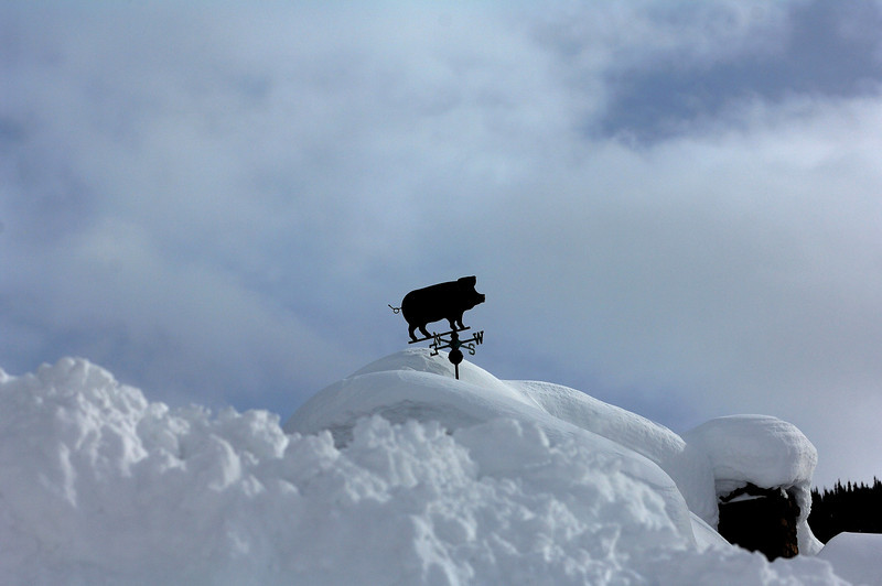 Pig on the roof (Crested Butte )