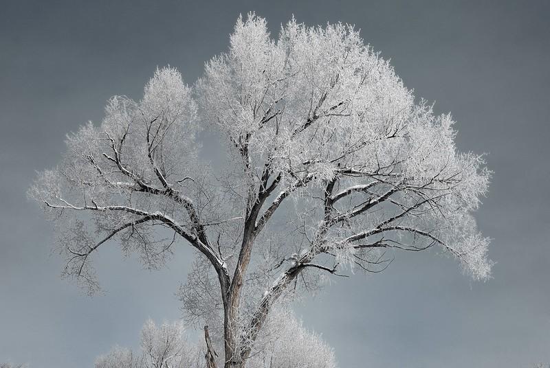 Tree on Gunnison river bank