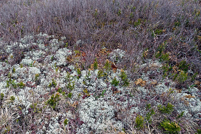 Ground Cover, Blackwater River Floodplain, Canaan Valley National Wildlife Refuge, West Virginia