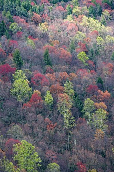Blackwater Falls State Park, West Virginia