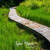 21  G Boardwalk Through Reeds