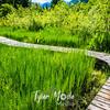 22  G Boardwalk Through Reeds