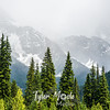 42  G Canadian Rockies Trees