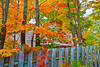 Canada, Quebec, Mont-Tremblant, Laurentian, Fall Colors, Foliage, 加拿大,魁北克,秋色