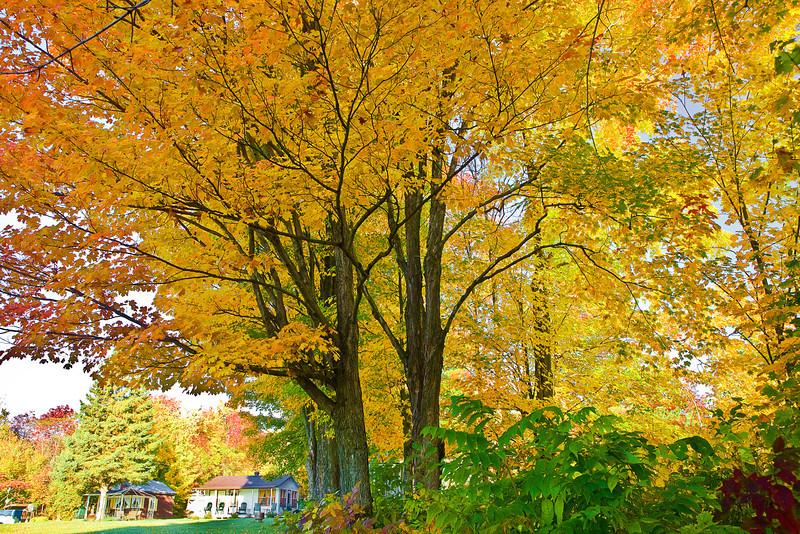 Canada, Quebec, Quebec City, Fall Colors, Landscape, 加拿大 风景, 魁北克, 秋色