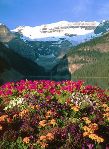 (B052)  Flowers at Lake Louise - Banff National Park