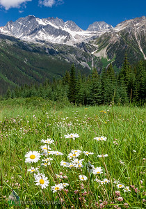 Rogers Pass  (BC-07015)