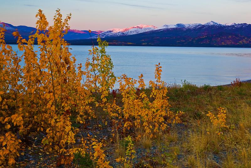 Canada, Yukon, Alaska Highway, Kluane Lake, Sunset, Destruction Bay , Fall Colors, 加拿大, 育空, 阿拉斯加高速公路, 秋色