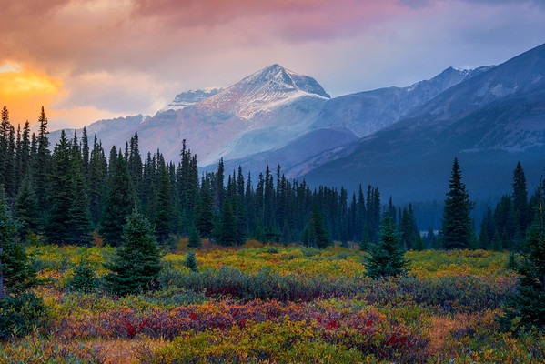Fall Colors In The Bow Lake Meadows - Bow Lake, Icefields Parkway, Banff National Park, AB, Canada