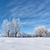 The Stark Winter Beauty of the Prairies
