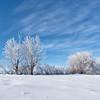 The Stark Winter Beauty of the Prairies