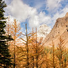Mountains and Larches