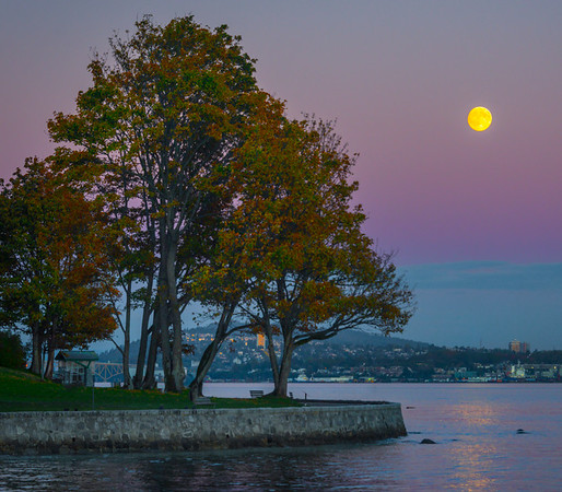 Full Moon And Fall Color Trees - Stanley Park Seawall, Vancouver, BC, Canada