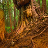 The Avatar Grove Tree Avatar Grove,  Vancouver Island, BC, Canada