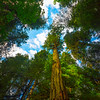 Looking Up From Cathedral Grove Valley Floor Cathedral Grove,  Vancouver Island, BC, Canada