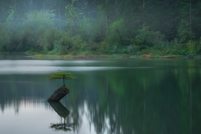 Fairy Lake Under Evening Mist - Fairy Lake, Vancouver Island, BC, Canada