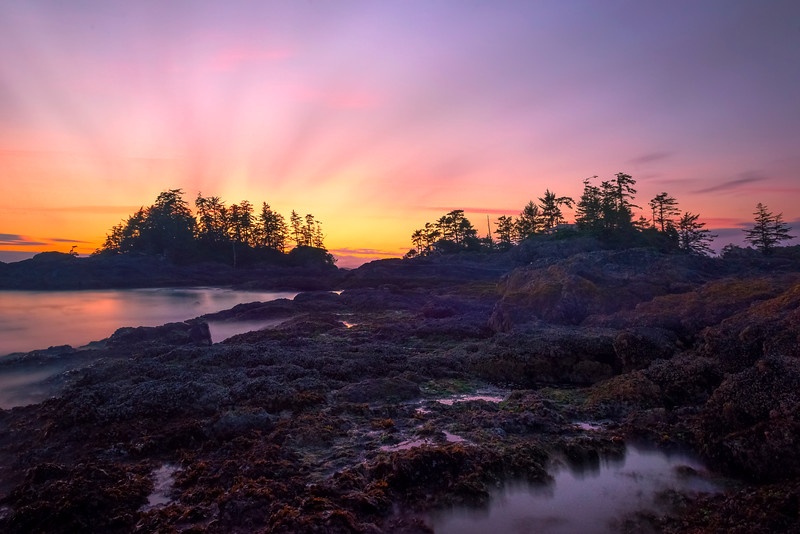 The Twilight Hour On Frank Island Chesterman Beach, Tofino,  Vancouver Island, BC, Canada