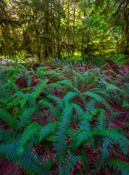 A Mix Of All Seasons In Cathedral Grove Cathedral Grove,  Vancouver Island, BC, Canada