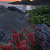 Indian Paintbrush Seaside - Botany Bay, Juan De Fuca Trail,  Vancouver Island, BC, Canada
