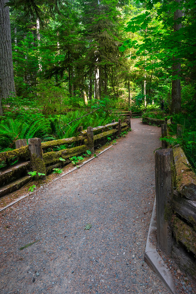 One Of The Many Trails Through Cathedral Grove_30x20 Cathedral Grove,  Vancouver Island, BC, Canada