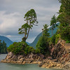 Tonquin Bay Harbour With Leaning Tree Tonquin Island, Tofino, Vancouver Island, BC, Canada
