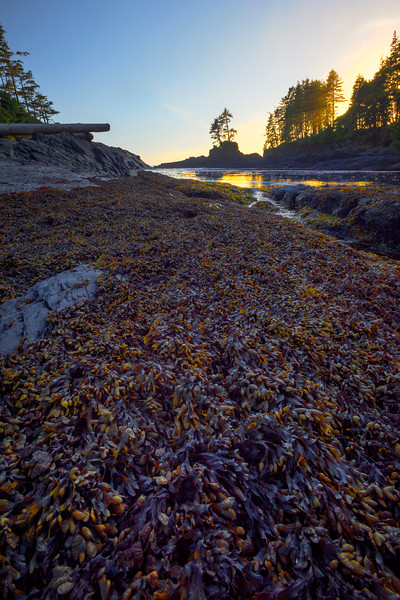 Coastal Life Along The Shore Near Sunset - Botany Bay, Juan De Fuca Trail,  Vancouver Island, BC, Canada