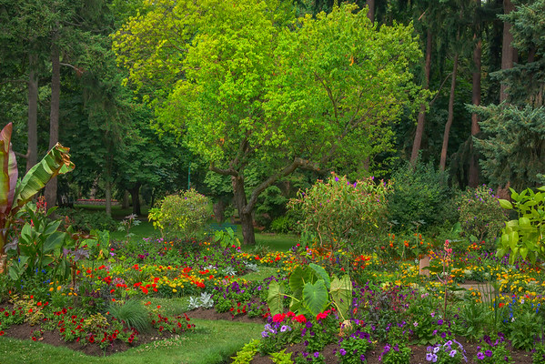 Color Garden And Tree - Beacon Hill Park, Victoria, Vancouver Island, BC