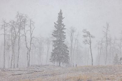 Spring Snow Storm