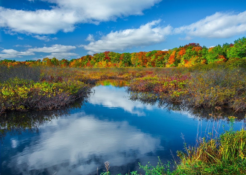 Stream Pond In Meadow With Autumn Mirror