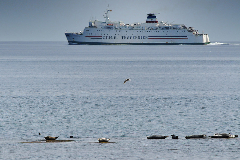 A flock of sunbathing seals watch the Iles-de-la-Madeleine ferry depart from Souris, PEI