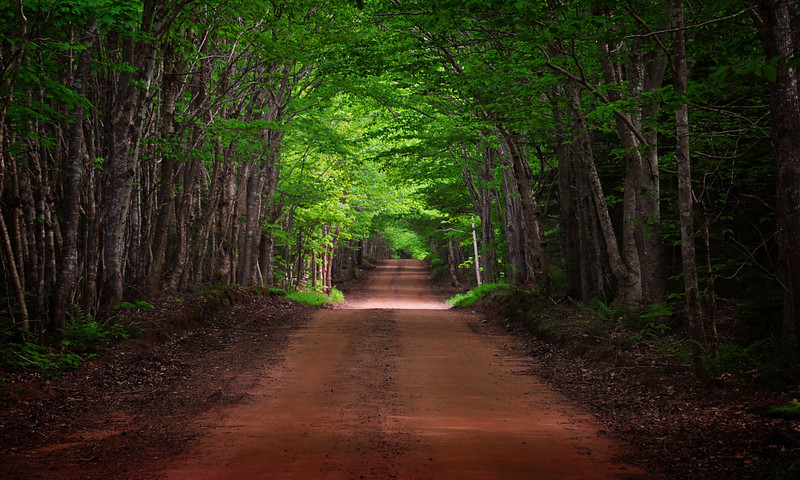 Another one of those wonderful, red roads of PEI.