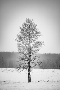 Winter Solitude