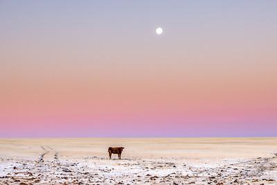 Pastel Moon Set
