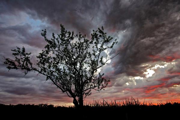Prairie, thunderstorm, Regina, tree