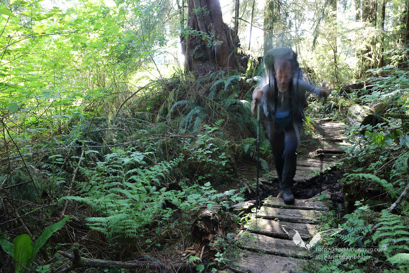 Day 6 - Still fighting with slippery, wet and muddy boardwalks in the woods.