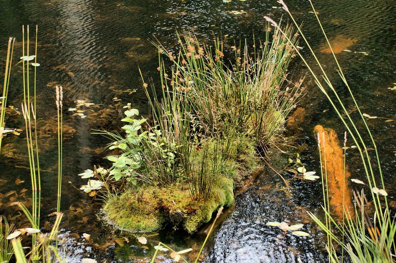 Natural planter, Laughlin Lake Galiano Island.