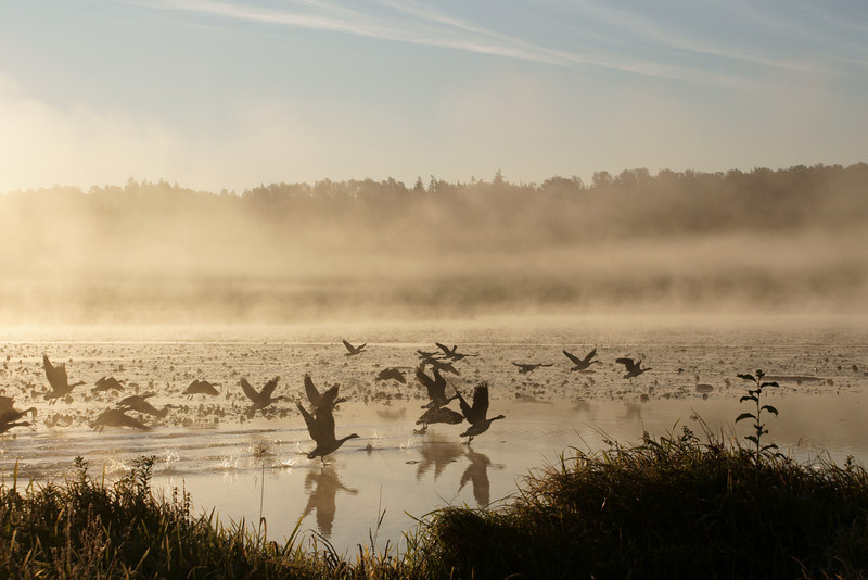 Birds take flight through the fog at sunrise