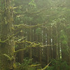 Rain Forest near Tofino