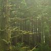 Rain Forest near Tofino