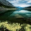 Algae at Medicine Lake