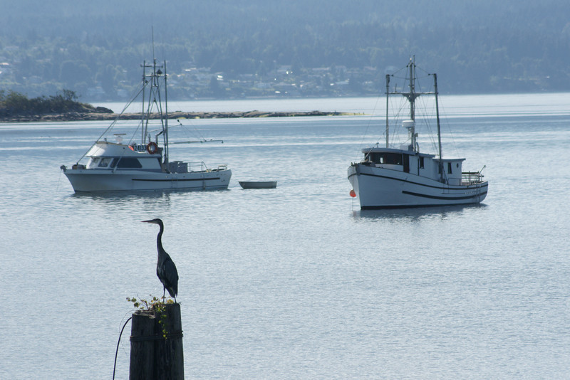 Great Blue Heron and fishing boats