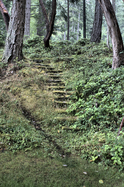 Moss covered stairs in the forest.