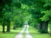 Hall of Trees, Niagara, ON