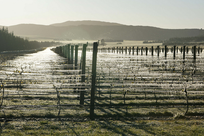 Montana Vineyard Waipara