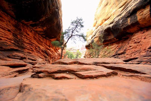 A Rocky Canyon Trail