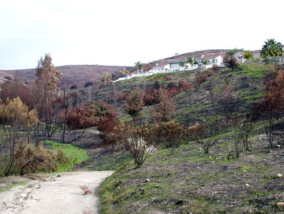 Canyons after the Fire 2005