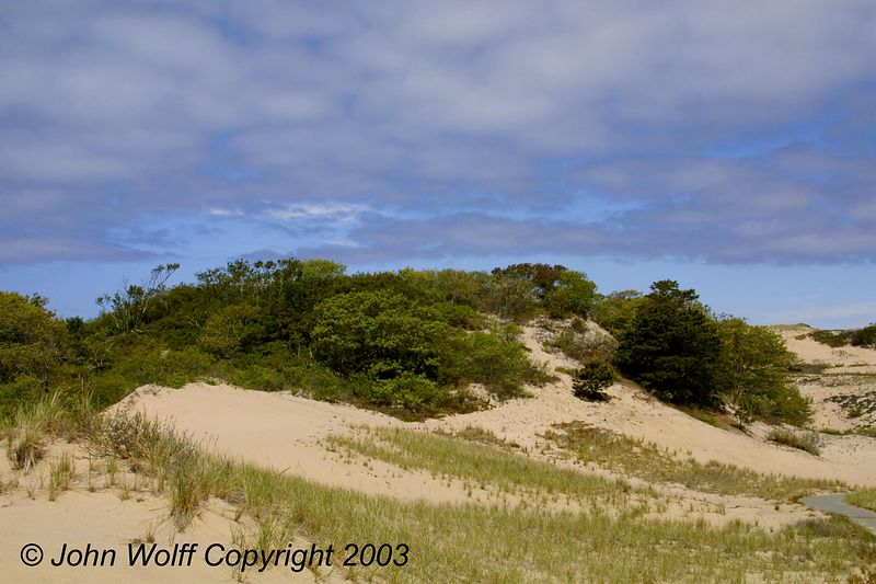 <b> Dunes and bushes near bike path </b>