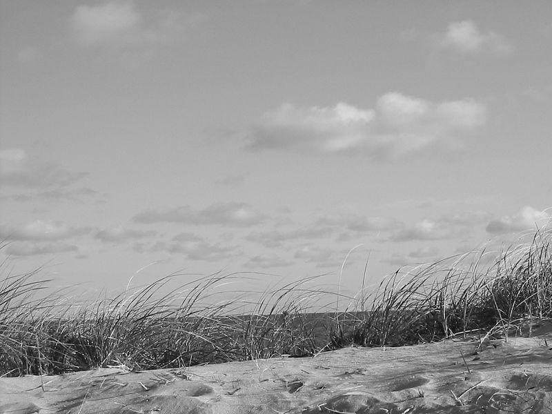Bass River Beach